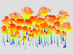 Image of TLS tree point cloud data dataset